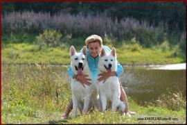 """Щенки белой швейцарской овчарки в питомнике """"Карнеликс"""""""