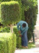Услуги садовника. Комплексный уход за садом
